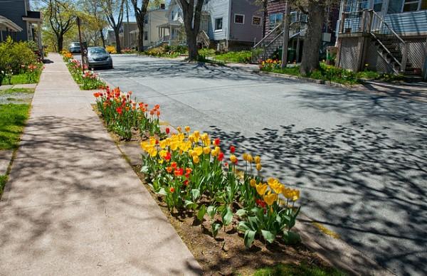 Tulips on Tulip Street, Dartmouth