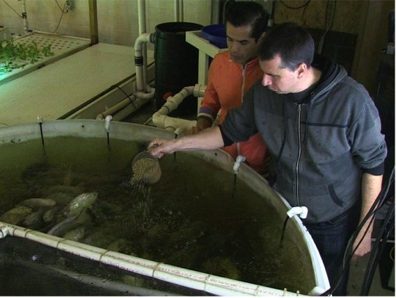 Aqua Greens founders Pablo Alvarez (left) and Craig Petten feed fish at Aqua Grower's aquaponic farm in Detroit