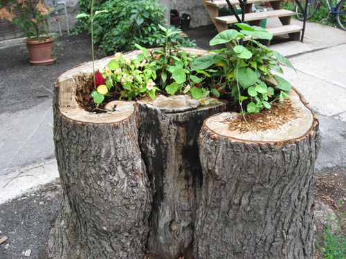 Treestump Garden close