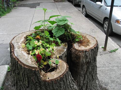 Treestump Garden closer