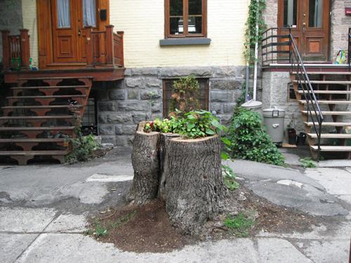 Treestump Garden in situ