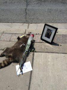 Memorialized #DeadRaccooonTO. From @jasonwagar/Twitter